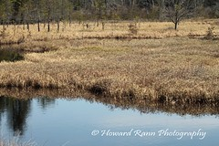 Pine Barrens  (2) (Framemaker 2014) Tags: pine barrens wharton state park burlington county new jersey forest united states america