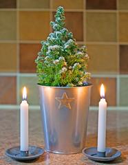 Merry Christmas, Buon Natale, Joyeux Noël, Feliz Navidad, Frohe Weihnachten. A photograph of my little Christmas Tree. (Minoltakid) Tags: merrychristmas buonnatale joyeuxnoël feliznavidad froheweihnachten merry christmas little christmastree happychristmas stilllife tree firtree small candles candlelight illuminated f28 a580 candlestickholder candleholder candle light festive festiveseason theminoltakid minoltakid rossdevans rossevans star pot silver whitecandle indoors flickr christmasday photo photograph sony dt35mmf18sam 35mm primelens message fun christmas2017 december december2017 smalltree festivetree treeinapot pottedtree plant