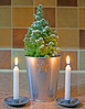 Merry Christmas, Buon Natale, Joyeux Noël, Feliz Navidad, Frohe Weihnachten. A photograph of my little Christmas Tree. (Minoltakid) Tags: merrychristmas buonnatale joyeuxnoël feliznavidad froheweihnachten merry christmas little christmastree happychristmas stilllife tree firtree small candles candlelight illuminated f28 a580 candlestickholder candleholder candle light festive festiveseason theminoltakid minoltakid rossdevans rossevans star pot silver whitecandle indoors flickr christmasday photo photograph sony dt35mmf18sam 35mm primelens message fun christmas2017 december december2017 smalltree festivetree treeinapot pottedtree plant