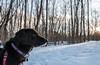 Cortana Snow Hike (Tony Webster) Tags: cortana december minnesota scandia williamobrienstatepark dog statepark winter marineonsaintcroix unitedstates us