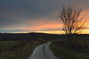 last light on the downs (Emma Varley) Tags: southdownsnationalpark footpath sunset tree fence hills