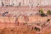 Terraces (Picardo2009) Tags: brycecanyonnationalpark rimtrail sunrisepoint usa utah amphiteatre nature outdoors overlook hiking trekking travel nationalpark picoftheday rockformations hoodoos desert arid plateau landscape