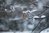 冬が来た (あおい.) Tags: japan nature winter snow tree leaf 日本 自然 冬 葉 樹 雪