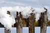 fence (Wolfgang Binder) Tags: fence snow winter subject wood still nikon d7000 zeiss planar planart2100