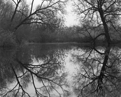 High water reflection (Other dreams) Tags: pentax6x7 200mm reflection pomerania oxbow lake poland vistula valley nature landscape vistulalandscapepark fp4 film analog d76 selfdev november 2017 fall autumn bw serenity