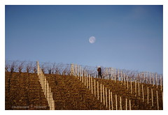 Sotto una buona luna (GP Camera) Tags: nikond80 nikonafsdx18105mmf3556gedvr countryside campagna moon luna sky cielo man uomo hill collina vineyard vigneto blue blu brown marrone morning mattino morninglight lucedelmattino shadows ombre textures trame depthoffield profonditàdicampo vignetting focus messaafuoco perspective prospettiva silence silenzio solitude solitudine shades sfumature winter inverno whiteframe cornicebianca italy italia piemonte monferrato darktable gimp opensource freesoftware softwarelibero digitalprocessing elaborazionedigitale