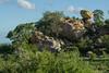 Kruger National Park 139 (borntotravel77) Tags: sudafrica southafrica krugerpark viaggiare canon travel