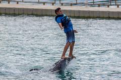 Dolphins (Fil.Al) Tags: esme