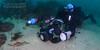 NLR_0781.jpg (Nicolas & Léna REMY) Tags: nsw underwater ocean australia nauticam sydney inon bareisland pacificocean diving mer photography plongée scuba sea