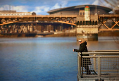Solitude With A View (Ian Sane) Tags: ian sane images solitudewithaview sunlight winter woman long black coat vera katz eastbank esplanade northeast portland oregon candid street photography burnside bridge moda center canon eos 5d mark ii camera ef70200mm f28l is usm lens