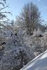 Trees in winter (II) (dididumm) Tags: sunshine sun tree trees snow winter view garden garten aussicht blick schnee bäume baum sonnenschein sonne