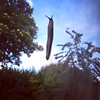 Leaping slug (Daniel James Greenwood) Tags: nokialumia mobilephonephotos danielgreenwood danielgreenwoodphotography