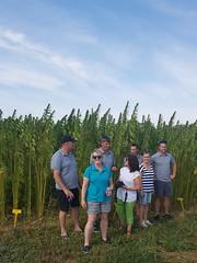 Hemp Crop (Bracus Triticum) Tags: hemp crop people アルバータ州 alberta canada カナダ 9月 九月 長月 くがつ kugatsu nagatsuki longmonth 2017 平成29年 fall autumn september