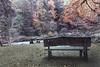 The Hermatige Dunkeld Perthshire_MG_4522 (ronniefleming@btinternet.com) Tags: river treesbench scotland hermatige perthshire dunkeld visitscotland walkhighlands thetrossachs