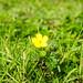 One little flower