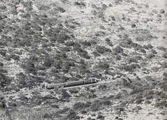 Israel Railways - ISR diesel locomotive (GM/SAFB, 1952) and two passenger coaches on the railway line to Jerusalem (HISTORICAL RAILWAY IMAGES) Tags: train isr israel railways רכבת ישראל קטר ירושלים