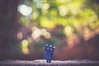 (janetcmt's pictures) Tags: carlzeiss carlzeissjena m42 pancolar danboard nyanboard bokeh