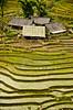 Countryside in Vietnam (Jecika381) Tags: rice fields houses vietnam sapa village