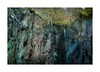 Life on the edge (catkin314) Tags: hodgeclose quarry tilberthwaite lakedistrict rocks life complexity waterfall cumbria autumn2017 slate rewilding backtonature