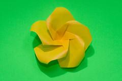 Plumeria (Brian Ritchie) Tags: michaellafosse flower modular origami