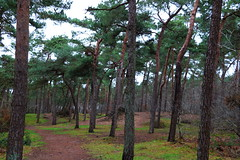 woods (sannegrashoff) Tags: woods tree trees bos bossen bomen boom green groen forest path bospad pad park grass
