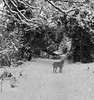 11/12 Walking in the snow (garyjones1959) Tags: winter path vizsla wirehaired hungarian dog amble walk countryside ice snow monochrome white black bw iphone 3652017 365
