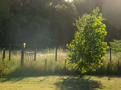 365-345 (Letua) Tags: 365project alambrado arbol backlight backlighted bokeh contraluz fence green naturaleza nature tree verde