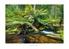 Russell Falls Walk - Tasmania (dominicscottphotography.com) Tags: australia tasmania russell falls sony sel1635gm dominicscott a7rii leefilters manfrotto waterfall