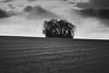 Ombre et lumière (Meculda) Tags: ombre lumière nikon france monochrome monochrom noiretblanc blackandwhite campagne extérieur jour ciel champs arbres bosquet sigma 105mm french photographer landscape nature
