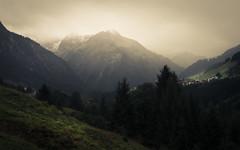 Fog Lights (Netsrak) Tags: kleinwalsertal berg berge gebirge alpen baum wald wiese licht at österreich mittelberg riezlern hirschegg nebel mist fog