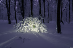 Snow light sculpture (Eifeltopia) Tags: sculpture tree natural erbeskopf snow schnee forest wald germany rheinlandpfalz evening mood light fineart glowing kunst art lichtkunst bernkastelwittlich hunsrück saarhunsrück lightart branches heavy skulptur