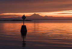 Pacific Coast morning (corybeatty) Tags: light sunrise landscape canada coast sun colour color silhouette victoria british columbia mountain bird buoy ocean