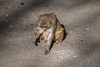DSC03525lr (yoshitoshi ABe) Tags: 20180104 吉祥寺 井の頭自然文化園 α6500 sigma18300mmf3563dcmacrooshsmcontemporary014 サル