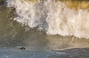Quick .... Dive... Now (Robin M Morrison) Tags: shag crashing wave brixham