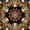 Kaleido Abstract 1668 (Lostash) Tags: art photography edited kaleidoscopes patterns shapes symmetry