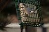 IMGP8601 (CatseyeGomez) Tags: nevada reno bird nuthatch redbreasted