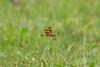lake katherine. july 2017 (timp37) Tags: summer illinois lake katherine july 2017 insect dragonfly palos