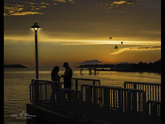 Will you Marry me ? (Peter R. Howard) Tags: couple marry sunset birds sea romantic railings pier lamp light clouds flamingos pelicans florida cedarkey water ocean sky people girl boy man woman