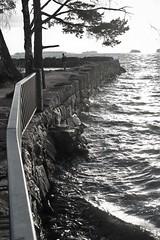 6Q3A0351 (www.ilkkajukarainen.fi) Tags: espoo visit sea meri tarvel traveling december joulukuu blackandwhite mustavakoinen haukilahti suomi suomi100 eu europa scandinavia finland finlande nature luonto landscape maisema