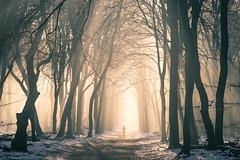 Lonely Walker (Guido de Kleijn) Tags: gelderland nederland netherlands veluwe hogeveluwe guidodekleijn nikond500 nikon1680f28 mist sun sunrays guelders garderen drie