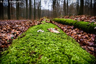 Im Wald / In the Forest