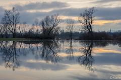 1__.jpg (Nu Mero) Tags: coucherdesoleil paysage innondation ried reflexion nature leverdesoleil sunrise sunset sélestat grandest france fr