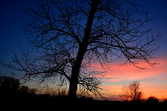 Winter Trees (NaturalLight) Tags: winter tree sunset chisholmcreekpark wichita kansas