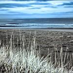 Tentsmuir beach Fife_MG_4906 thumbnail