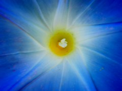Eye of a Day Lily (Stanley Zimny (Thank You for 29 Million views)) Tags: blue flower lily botanical center yellow