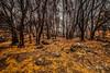 After The Calamity (Luis Sousa Lobo) Tags: img9749 fire serra açor portugal canon 70d 1018