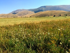 Roccaraso Piana delle cinquemiglia (28) (ottaviobeccegato) Tags: agricoltura campi montagne prati