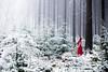 (elsvo) Tags: snow portrait selfportrait red colour winter forest nature