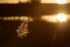 Camargue wake-up (NathalieSt) Tags: camargue europe france gard languedocroussillon legrauduroi leverdesoleil nikon nikond750 nikonpassion nikonphotography sunrise reed reeds roseaux