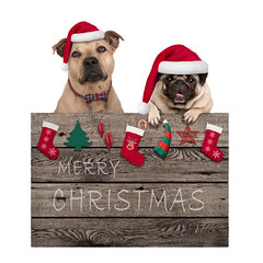 Merry Christmas dogs (monicaclick) Tags: advertising animal background blackboard blank board card celebrate celebrating celebration chalkboard christmas cute december decoration design dog droll elements feast festive funny greeting happy hat holidays isolated jolly lovely media merry paws pet pretty promotional pug puppy santa scrapbook season seasonal sign tradition traditional white winter wood terrier staffordshire staffy